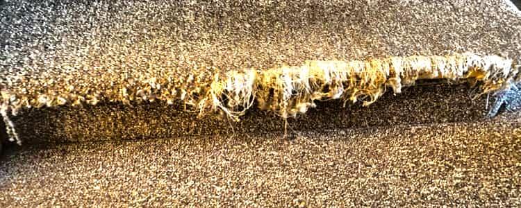 Best Carpet Repair Tranmere